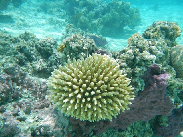Snorkletur med koraller