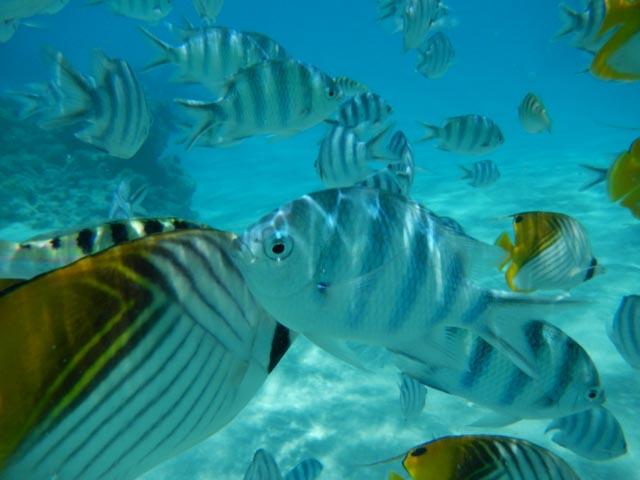 Som å svømme i et akvarium