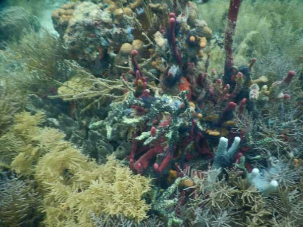 Koraller 5
