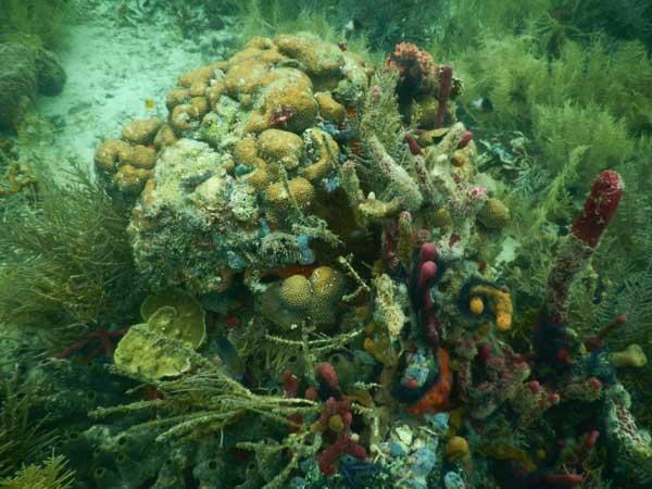 Koraller 4