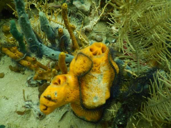 Koraller 3