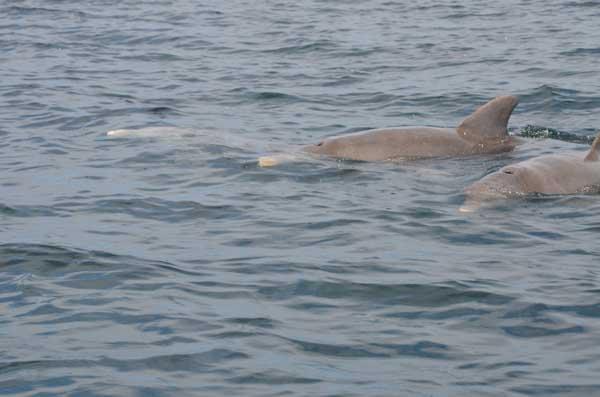 Mere delfiner