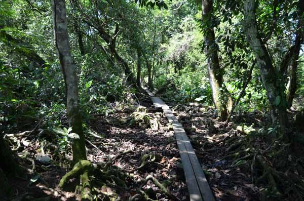Stien til landsbyen